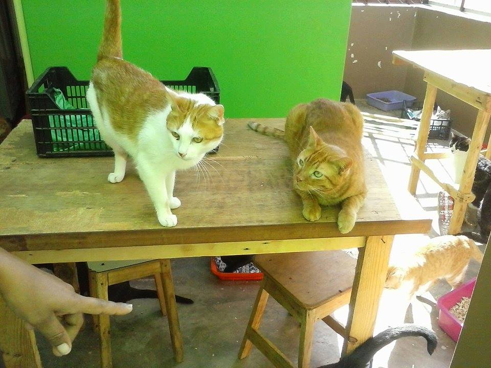 cats on the table