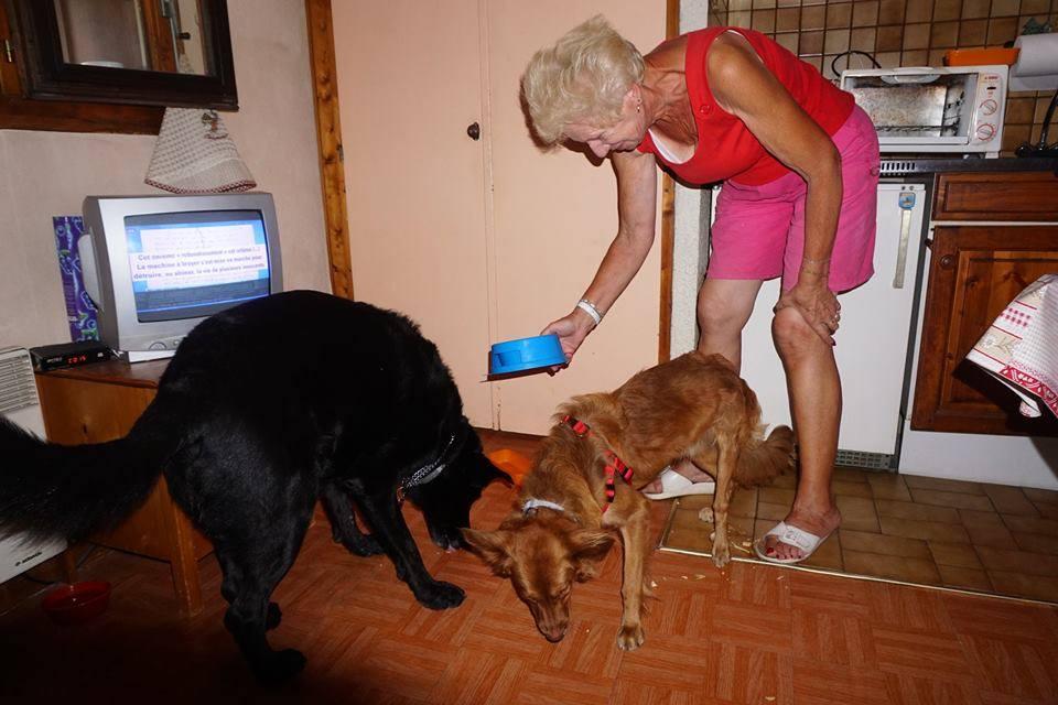 simabo's adoption of Lou dog