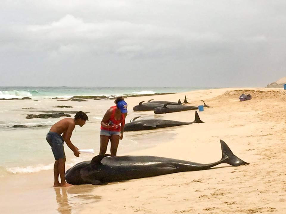 boa vista whales