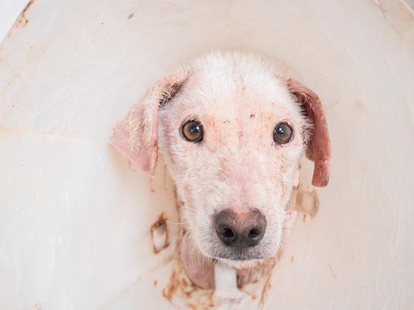 simabo dogs need help