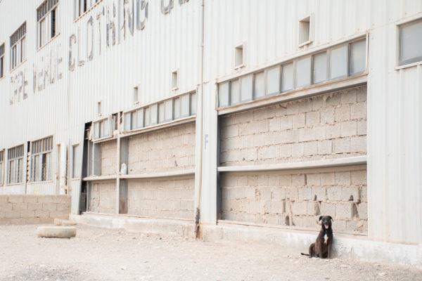 simabo dog shelter