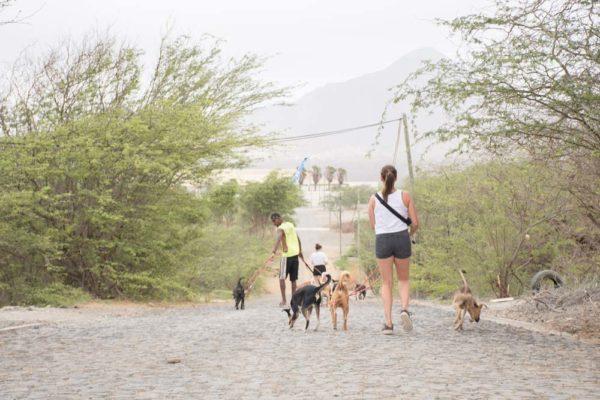 simabo volunteers walking dogs